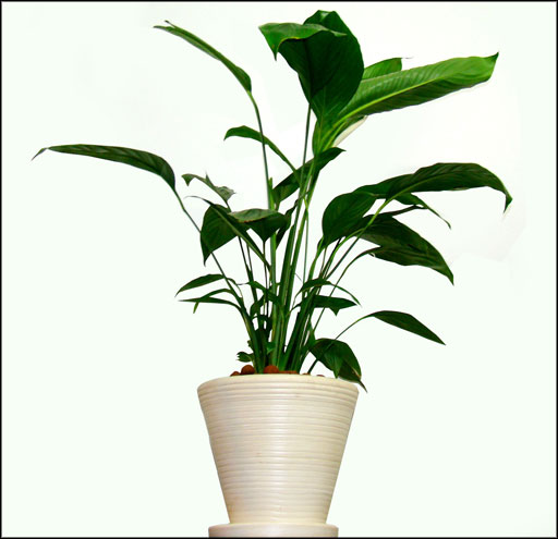 elegan pot for healthy office plants