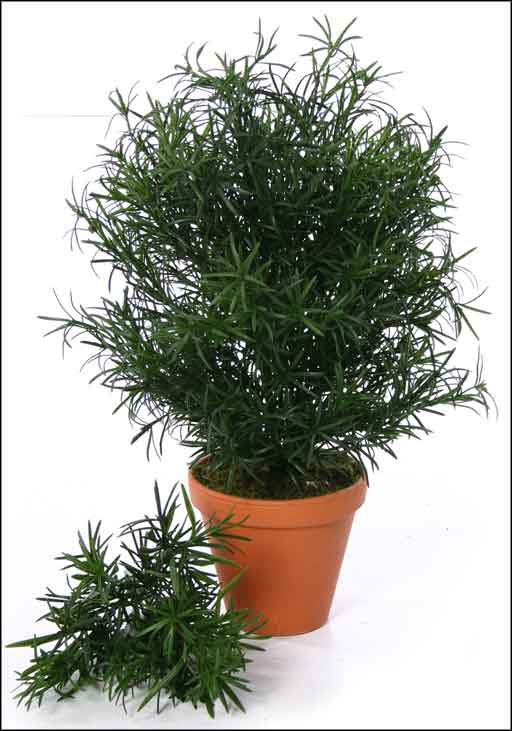 fake indoor podocarpus trees for the home