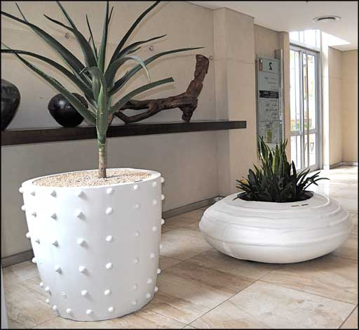 large ornamental indoor office plants